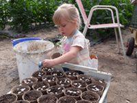 Leandra beim Stangenbohnen säen