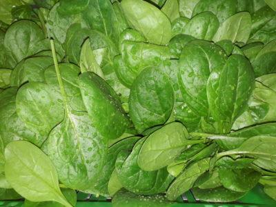 Spinat zum Kochen, roh als Salat oder in den Smoothie