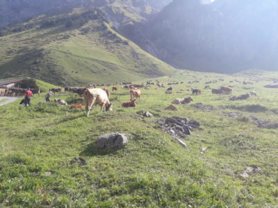 Alpabfahrt von der Alp Niedersurenen, Attinghausen