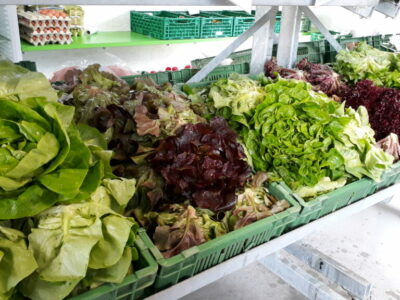 Salate im Hofladen